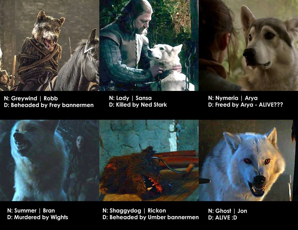 Game Of Thrones Dog Names